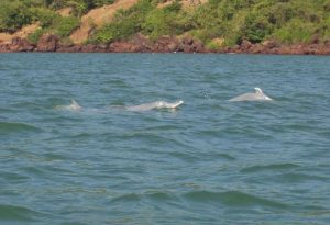 Dolphin Spotting in Goa
