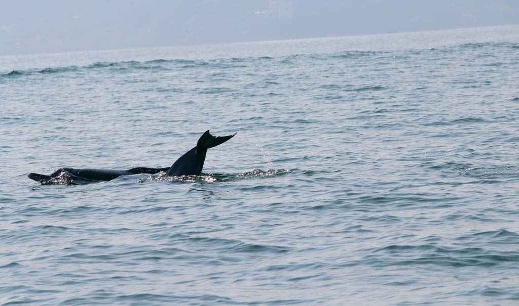 Dolphin-Boat-Booking-Information-Goa