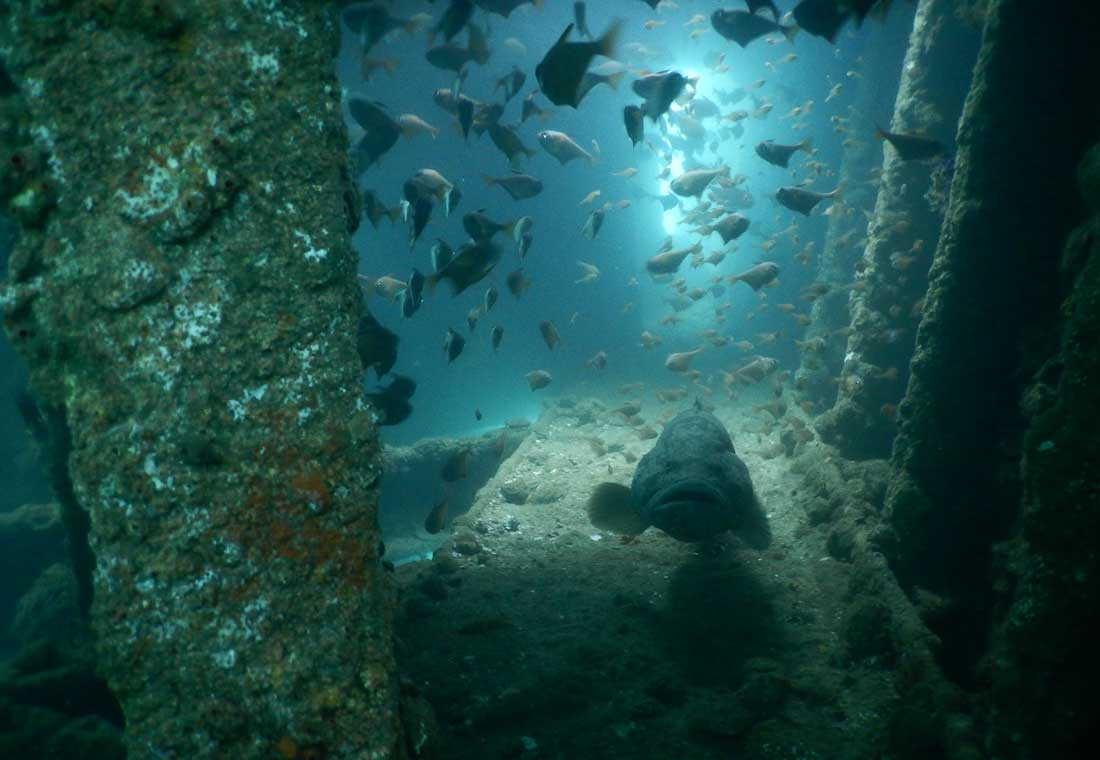 scuba-dive-goa-underwater-sea
